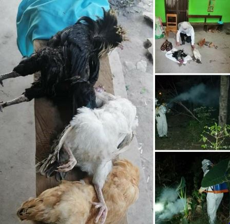 Ataque de abejas le mata varias gallinas a una familia en zona rural de Gracias, Lempira