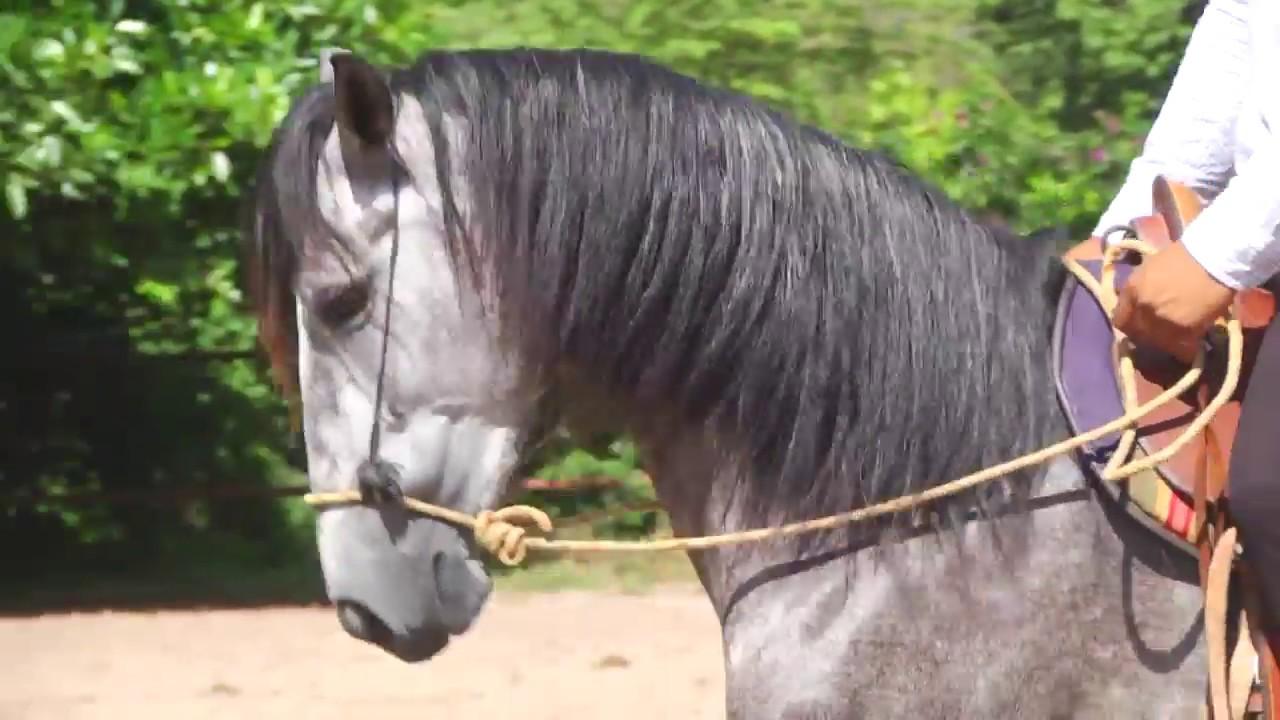 Pleito por un caballo en la capital hondureña.