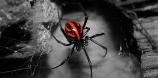 Viuda Negra. Foto La Sexta