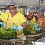 Empresa transnacional Chiquita se traslada a guatemala.