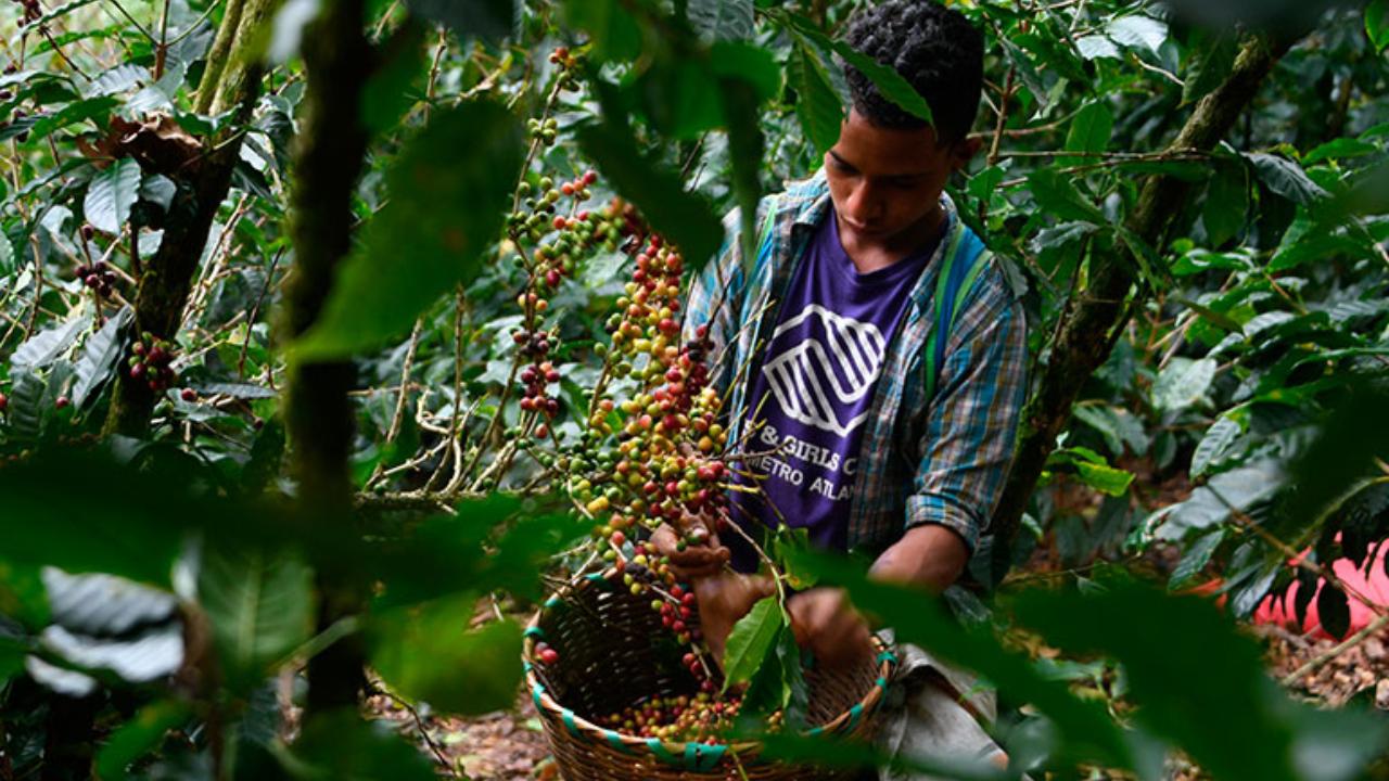 Dos de cada 10 niños en Honduras son víctimas de trabajo infantil, según Plan Internacional
