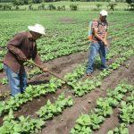 Productores Honduras
