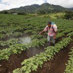 Productores en Honduras