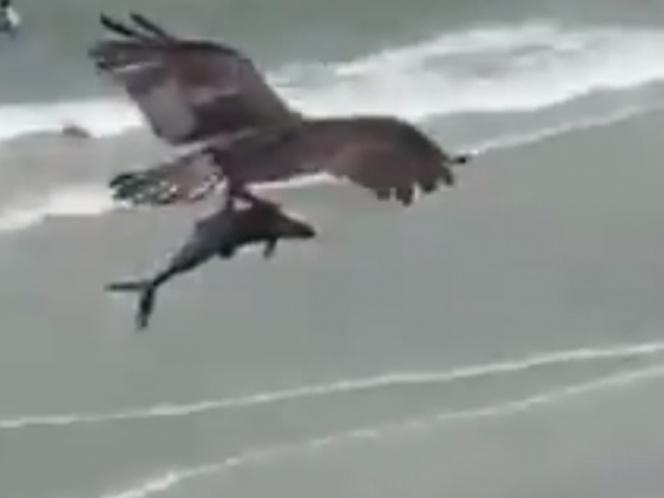 Video de Águila que atrapa con sus garras a un tiburón causa impacto