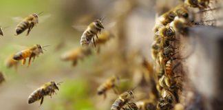 Ataque abejas