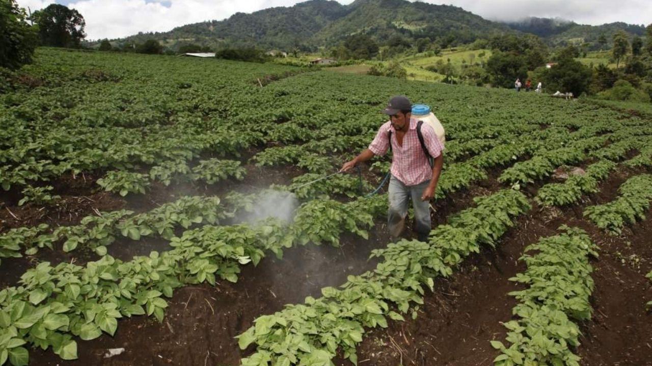 Editorial HRN: La pandemia de la indiferencia hacia el agro nacional
