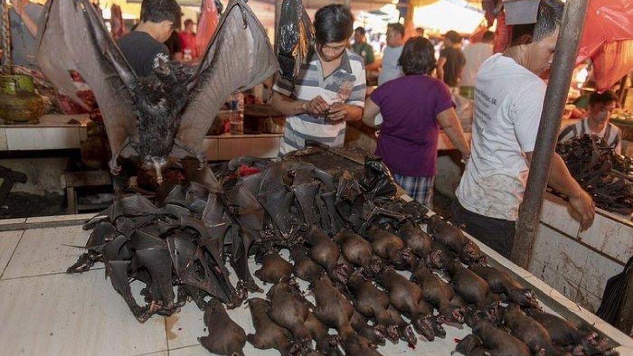 Hasta la cabeza del murciélago transmisor del covid utilizan ambicioso plato en Indonesia