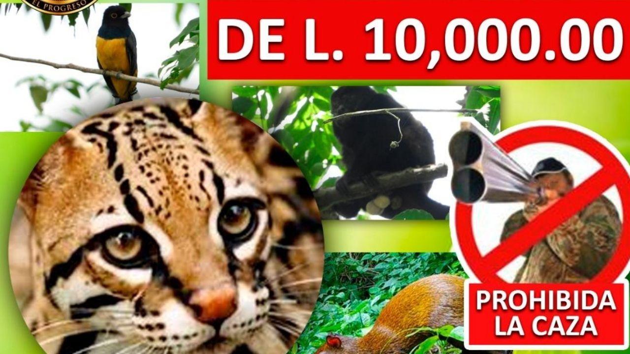 Ofrecen L 10 mil por información del responsable de atacar al tigrillo hallado en El Progreso