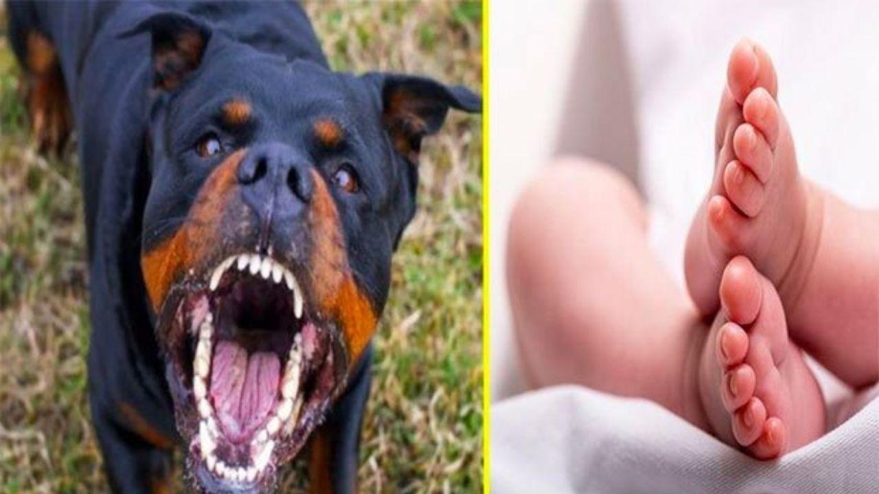 Rottweiler mata a un recién nacido e intenta enterrarlo