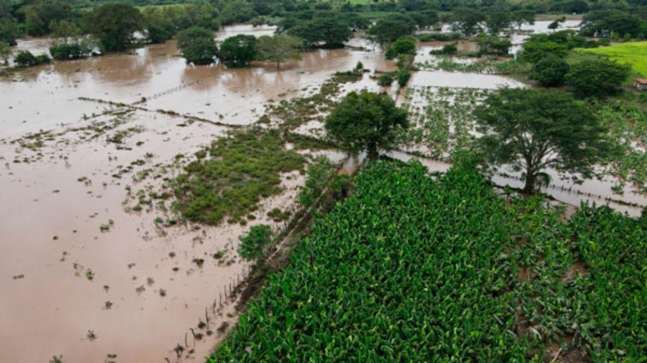 374 mil manzanas de cultivos afectadas por tormentas Iota y Eta en Honduras