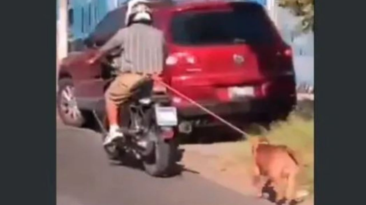 Indignación con hombre que amarró a su perro en una motocicleta mientras conducía en la vía pública en El Salvador, mira el video
