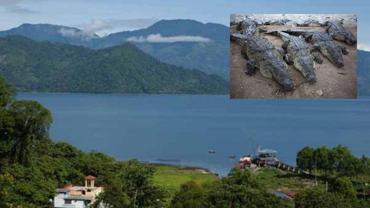 Casi 300 cocodrilos se escapan de los alrededores del Lago de Yojoa