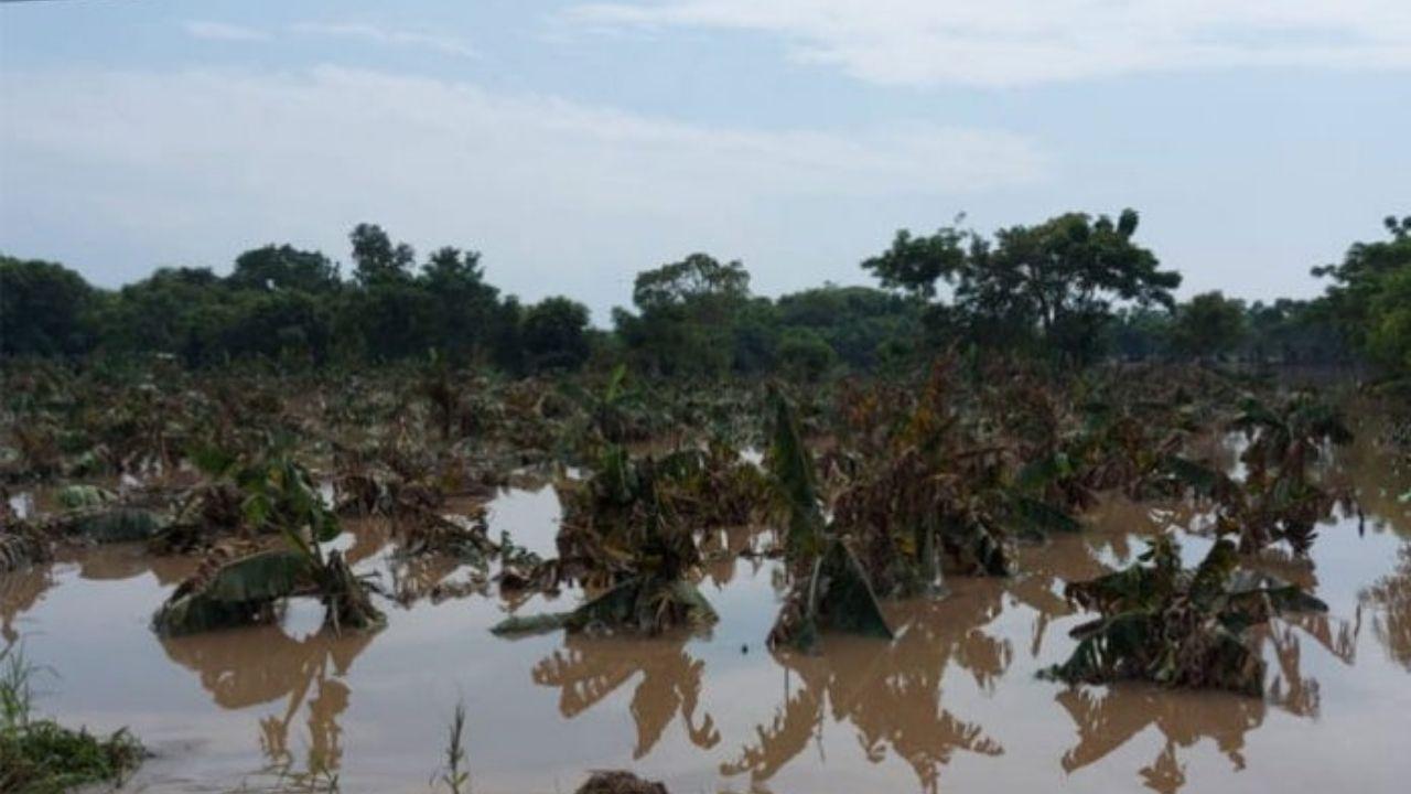 Más del 60 por ciento del sector agrícola resultó afectado por tormentas Eta e Iota en Honduras
