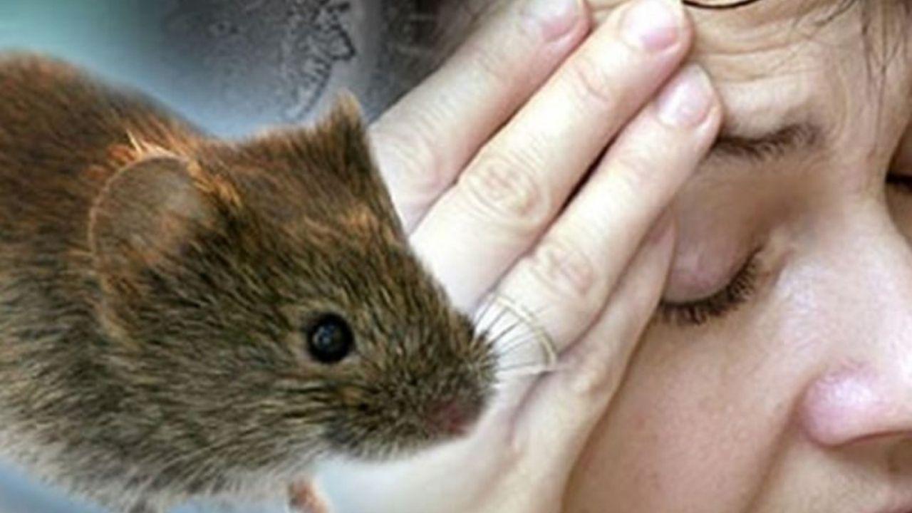 Ocho casos de leptospirosis se registran en el norte de Honduras