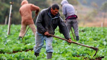 sector agricola de honduras
