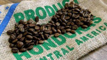 exportacion de cafe hondureño