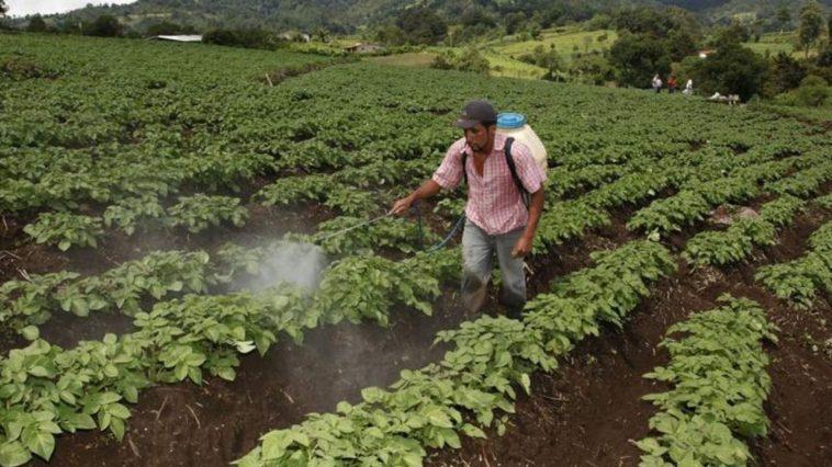 agricultura honduras