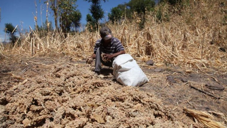 inseguridad alimentaria centroamerica