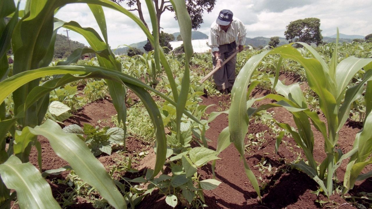 Lluvias aumentan preocupación entre productores agrícolas en la zona norte de Honduras
