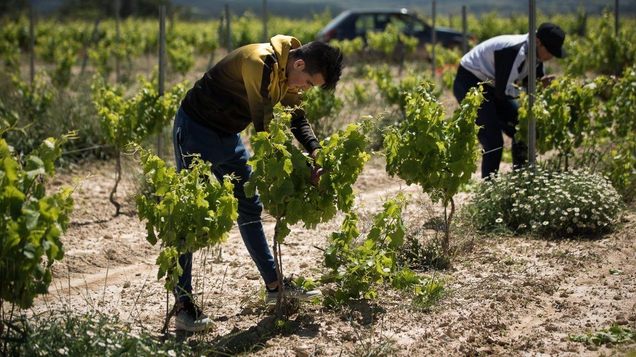Así funcionará propuesta de AMLO a Joe Biden para legalizar a migrantes centroamericanos