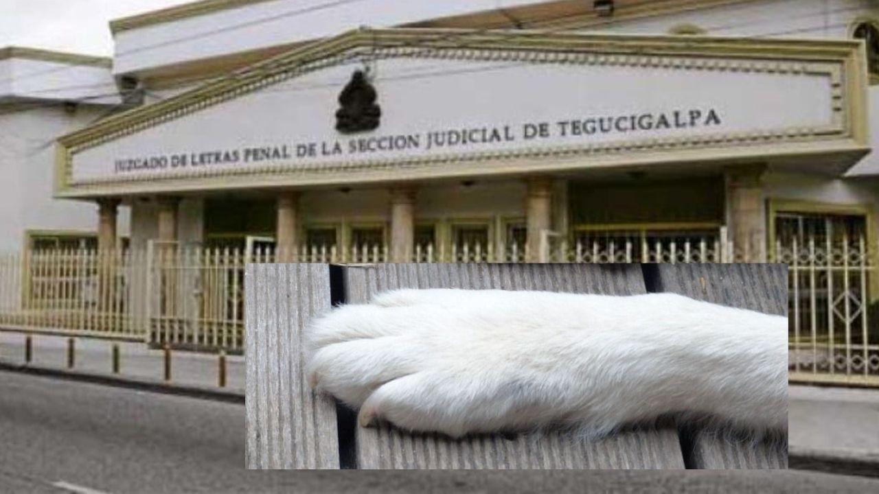 Honduras: Por primera vez perro asistirá a audiencia judicial en caso 'Sky'