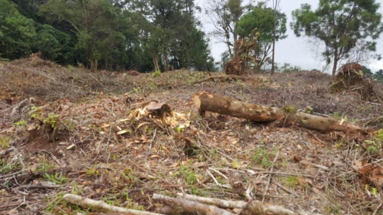 Honduras pierde entre 60,000 y 80,000 hectáreas de bosques a causa de la tala ilegal