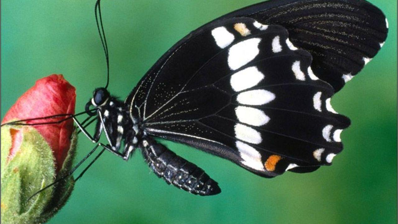 ¿Conoces el significado que tiene la visita de mariposas de colores a tu hogar? ¡Te sorprenderás!