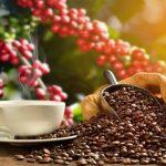 Café hondureño