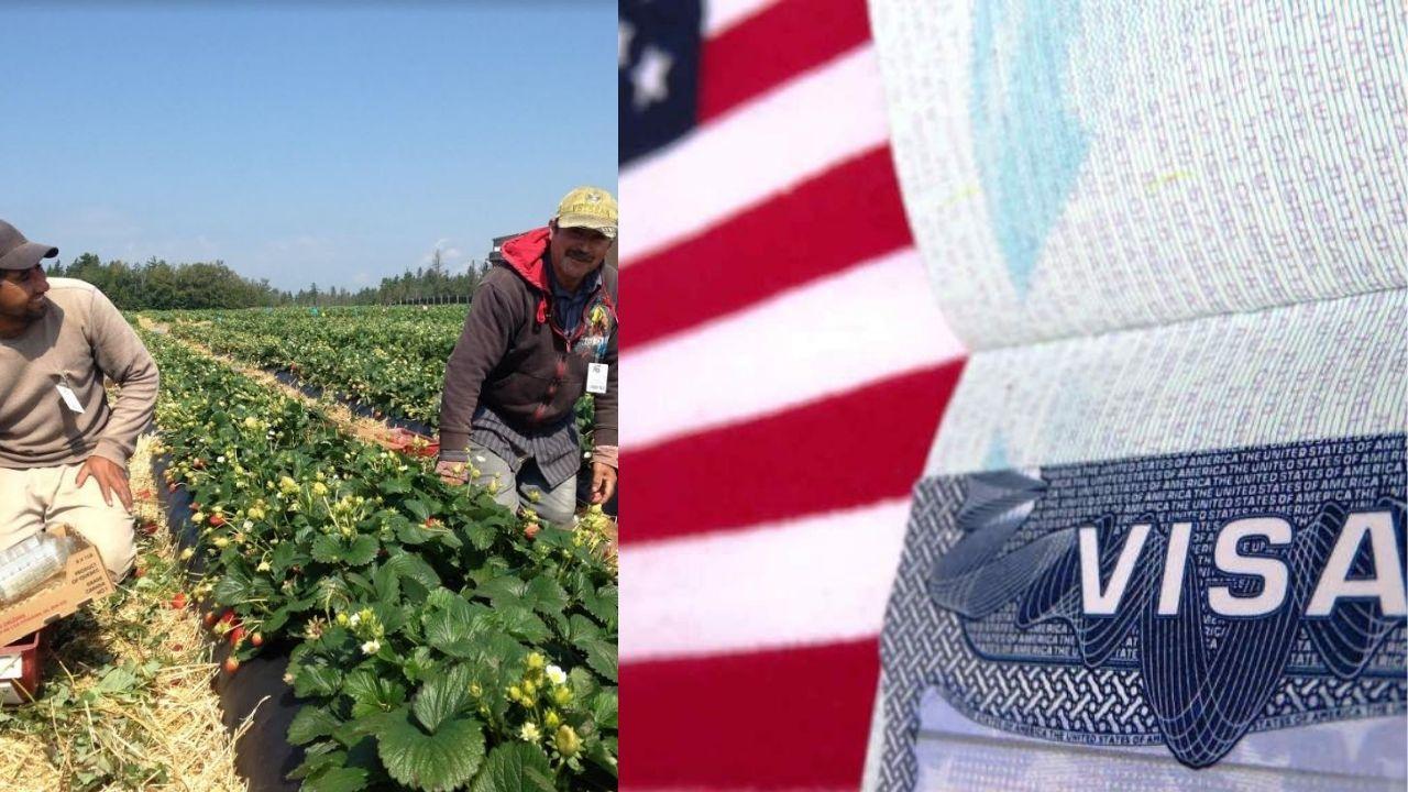 Conoce los dos programas de visas que permite a hondureños sin estudios universitarios  trabajar en Estados Unidos