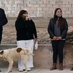 perrito orina a funcionaria en argentina