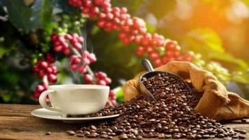 produccion de cafe honduras