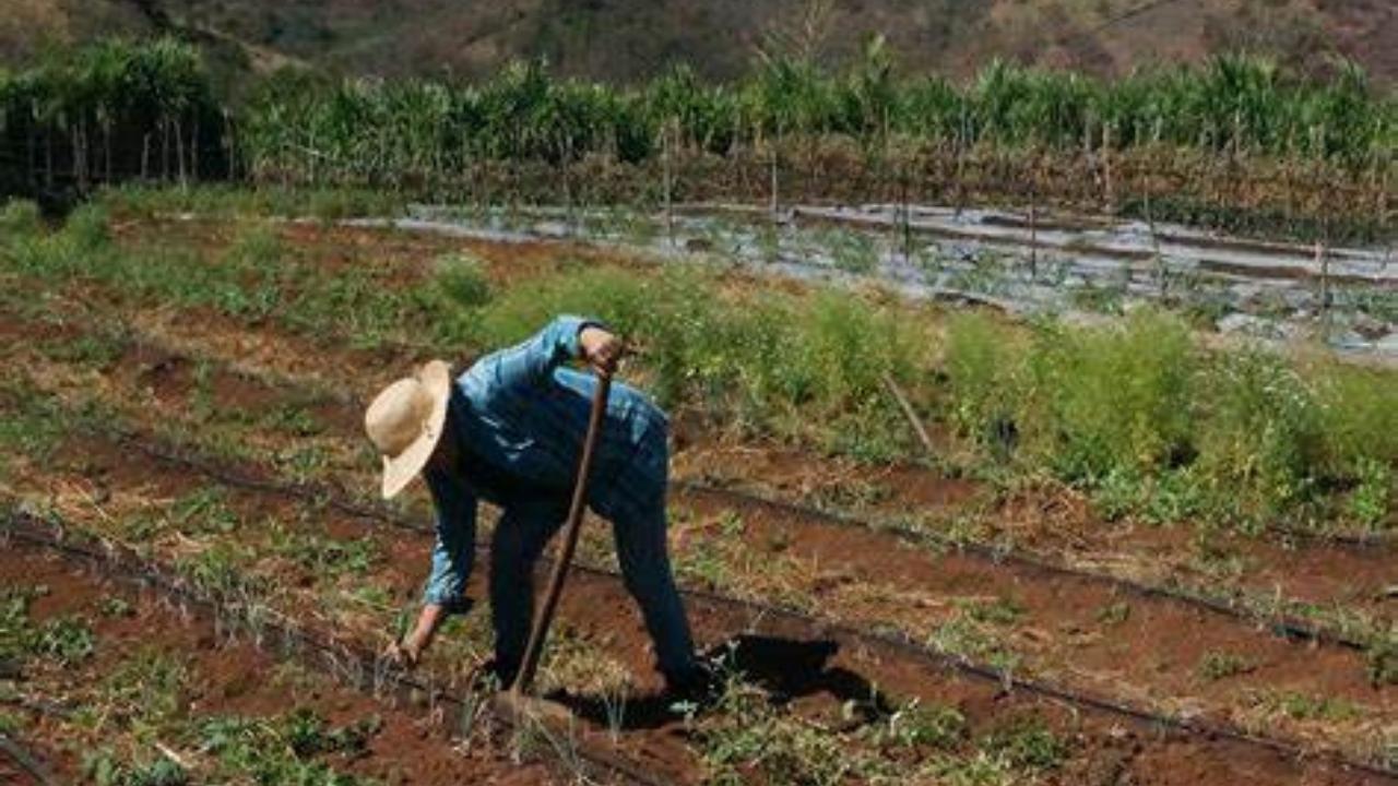 FAO: Casi 4 millones de personas en inseguridad alimentaria en Honduras