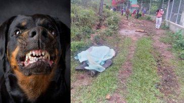 perror rottweiler collage de hombre muerto por ataque en honduras