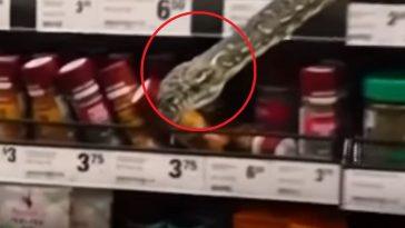Serpiente en el interior de un supermercado