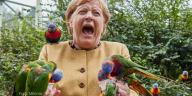 La canciller de Alemania, Angela Merkel, gritando mientras es picoteada por un loro y sostiene otros.