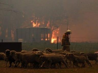 Al menos 327 especies en peligro de extinción en Australia por incendios