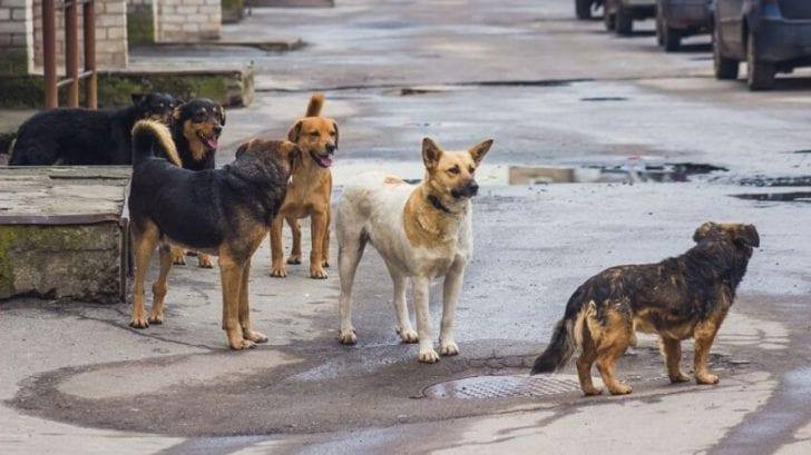 Coronavirus: libaneses abandonan y envenenan a los perros por creer que transmiten covid-19