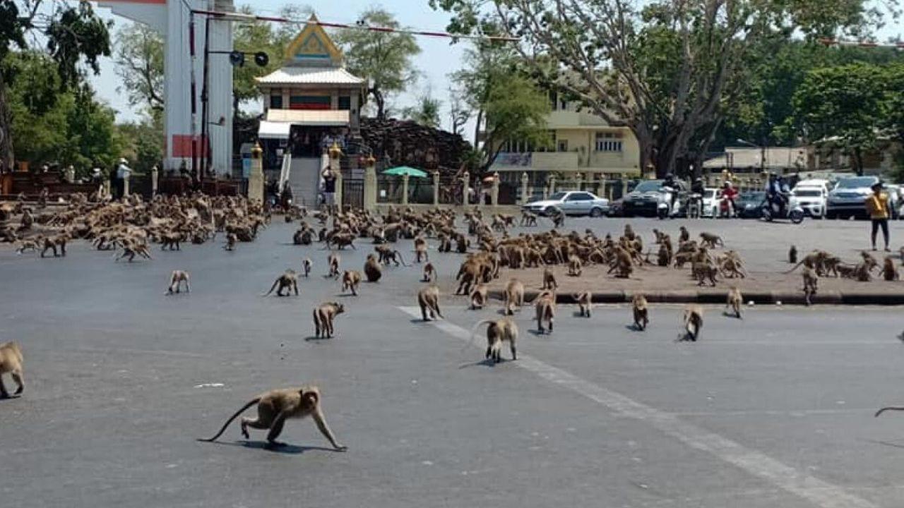 Decenas de fotografías y vídeos de usuarios en redes sociales, mostrando a los animales sueltos en las ciudades, se han viralizado.