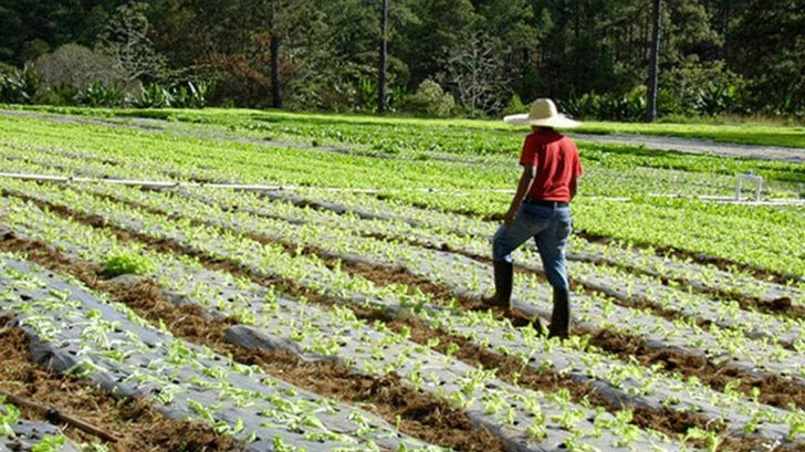 Producción de alimentos e industria alimentaria es declarada prioridad nacional por el gobierno de Honduras