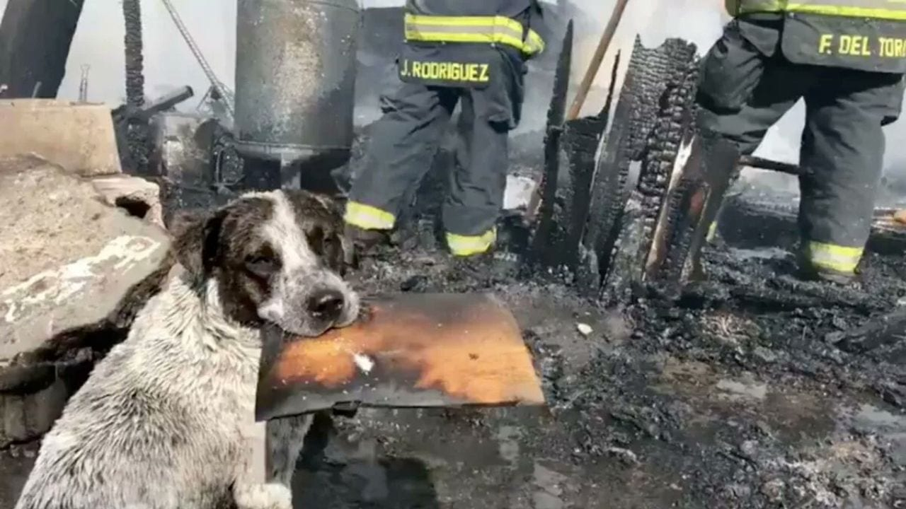 El canino lamentó la quema del lugar donde vivió cuatro años junto a sus dueños.