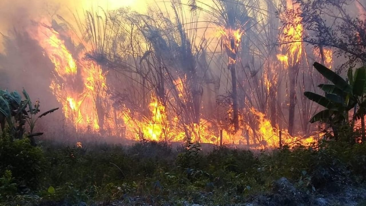 El país centroamericano al igual que Honduras, es uno de los más afectados año con año por las llamas