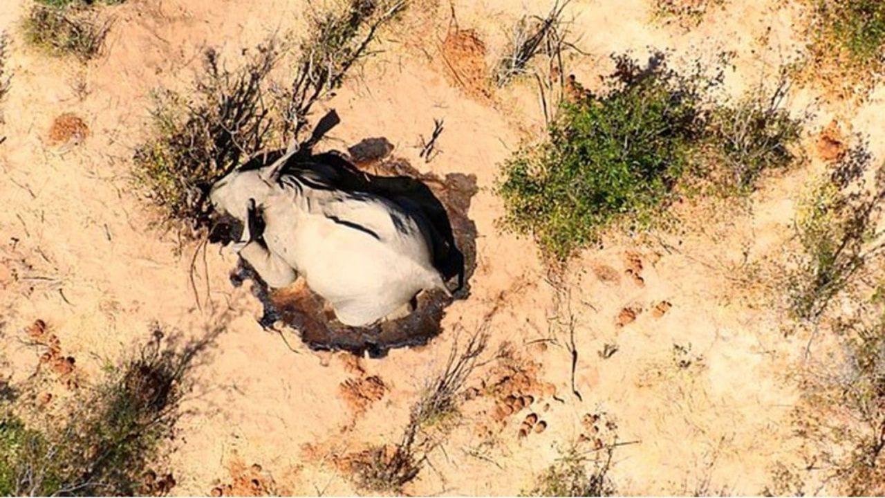 Entre mayo y julio de 2020 murieron de forma simultanea unos 300 elefantes en el sur de África
