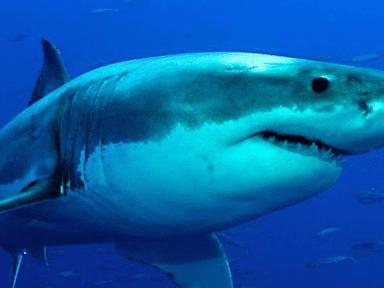 ¿Por qué medio millón de tiburones podrían morir a causa del desarrollo de una vacuna contra el covid?