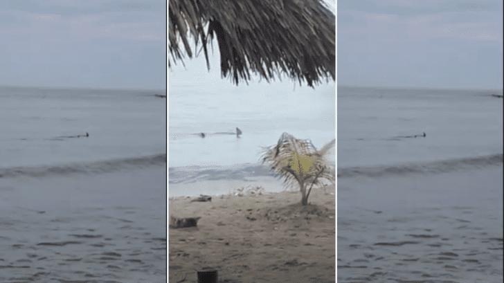 Graban video de supuestos tiburones en playas de Ceiba previo al feriado morazánico