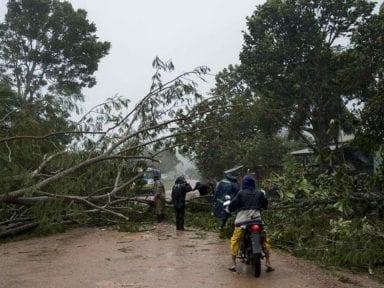 La madera caída por los huracanes en Nicaragua: ¿será para afectados o explotadores?