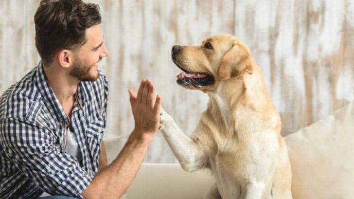 Antes de adoptar una mascota, conoce los cuidados que debes tener