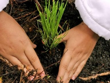 Honduras invertirá en 2021 unos 70 millones para reforestación tras impactos del cambio climático