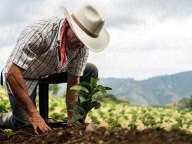 México distribuirá $30 millones a agricultores hondureños bajo el programa 'Sembrando Vida' con la intención de reducir la migración