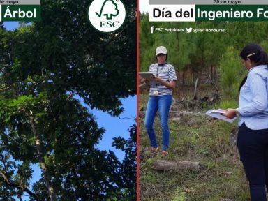 Ingenieros forestales celebran su día comprometidos con el ambiente