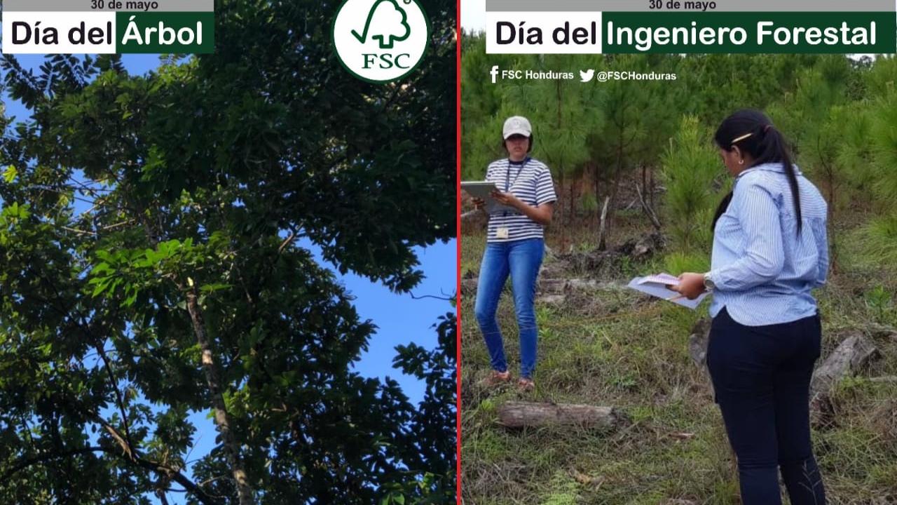 ¡Hoy es un buen día para recordar la importancia que tiene la reforestación para el medio ambiente!